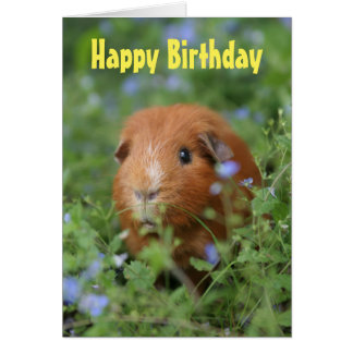 Happy Birthday card cute ginger guinea pig