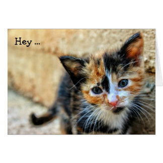 "Happy Birthday Card: Sweet Kitten says ""Hey..."" Greeting Card"