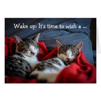 Happy Birthday Card: Two sleepy Kittens Greeting Card