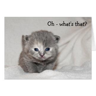 Happy Birthday Card with grey, blue-eyed Kitten