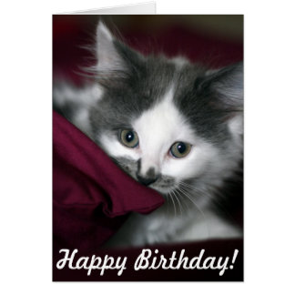 Happy Birthday Card with nice little Kitten!