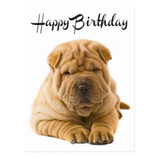 Happy Birthday Chinese Shar Pei Puppy Dog  Card