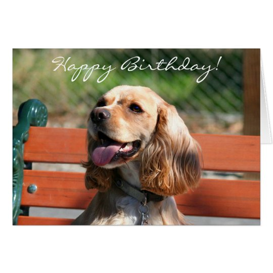 Happy Birthday Cocker Spaniel greeting card