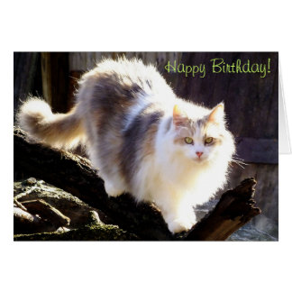 Happy Birthday Dilute Calico Maine Coon Card