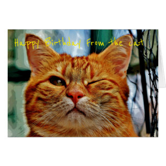 Happy Birthday from the cat Greeting Card