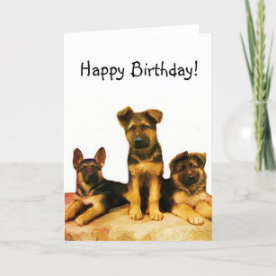 Happy Birthday German Shepherd Puppies Card