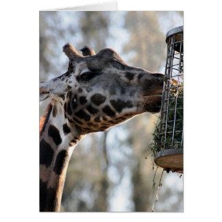 Happy Birthday - Giraffe Eating Card