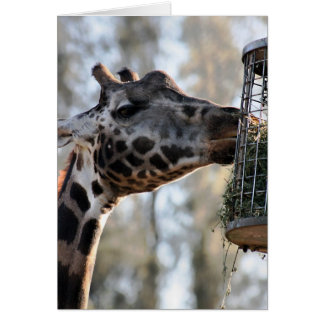 Happy Birthday - Giraffe Eating Greeting Card