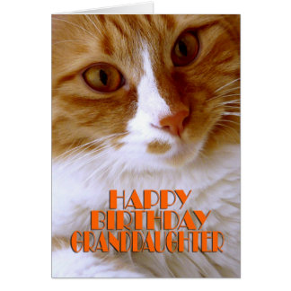 Happy Birthday Granddaughter - Sweet Cat Card