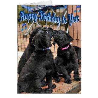 Happy Birthday Honor Litter Trio Card