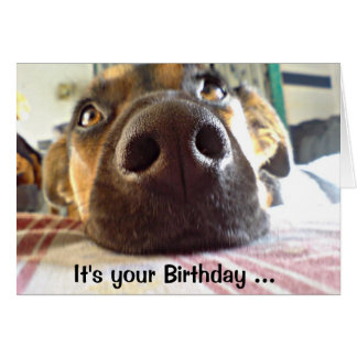 Happy Birthday I just NOSE it Cute Dog Card
