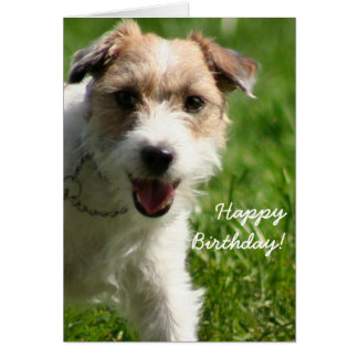 Happy Birthday Jack Russell Terrier greeting card