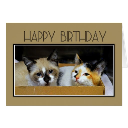 Happy Birthday Kittens in a Box Cards