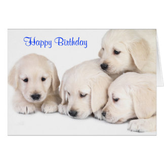 Happy Birthday Labrador Retriever Puppies Card