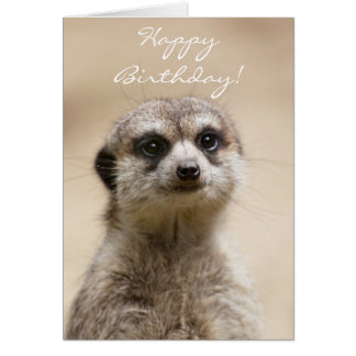 Happy Birthday Meerkat Card