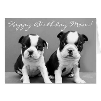 Happy Birthday Mom Boston Terrier Puppies card