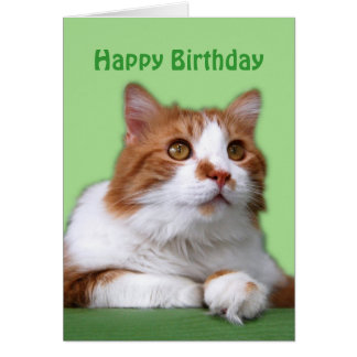 Happy Birthday Orange and White Thoughtful Cat Card