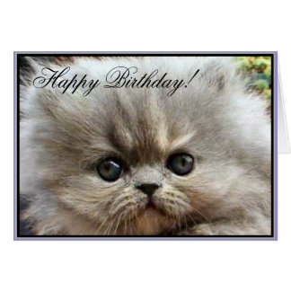 Happy Birthday Persian kitten greeting card
