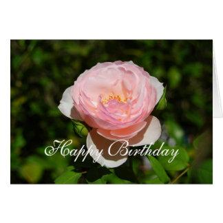 Happy Birthday Pink English Rose Card