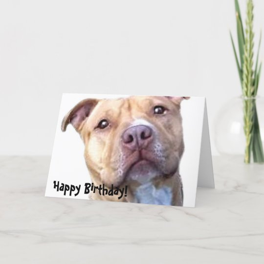 happy birthday pitbull greeting card  zazzleau