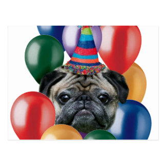 Happy birthday Pug dog Postcard