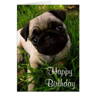 Happy Birthday Pug Puppy Dog Greeting Card