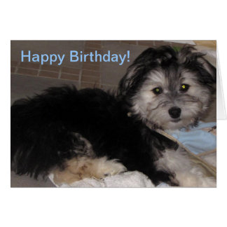 Happy Birthday  Puppy Havanese Rescue Card