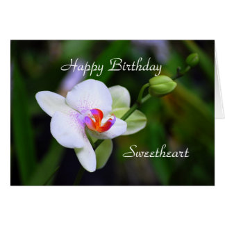 Happy Birthday Sweetheart Phalaenopsis Orchid Card