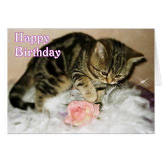 Happy Birthday - Tabby Kitten Birthday card