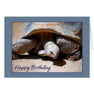 Happy Birthday Tortoise Card