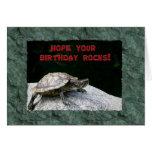 Happy Birthday, Turtle on Rock