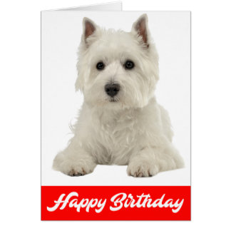Happy Birthday White Highland Terrier Puppy Dog Card