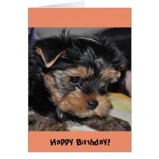 Happy Birthday! Yorkshire Terrier Greeting Card