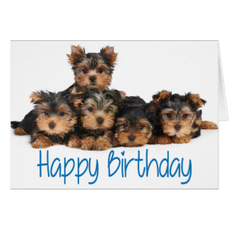 yorkie happy birthday yorkshire terrier gifts t shirts art posters other 1729