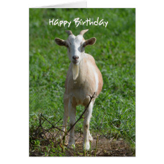 Happy Birthday You Old Goat, Card