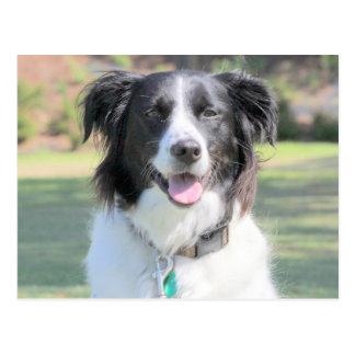 Happy Black And White Dog Closeup Postcard