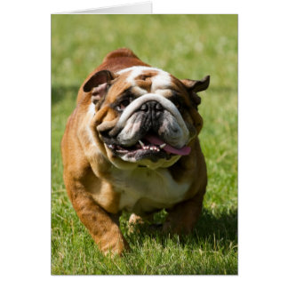 Happy Bulldog Running in Grass Card