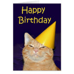 Happy cat Happy Birthday
