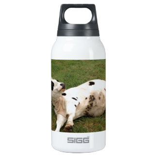 happy cow organic farm 0.3L insulated SIGG thermos water bottle