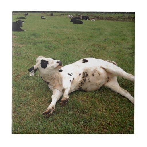 happy cow organic farm tile