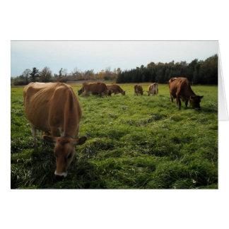 """""""Happy Cows"""" Card"""