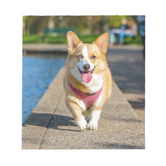 Happy Cute Blue and Brown eyed corgi panting Notepad