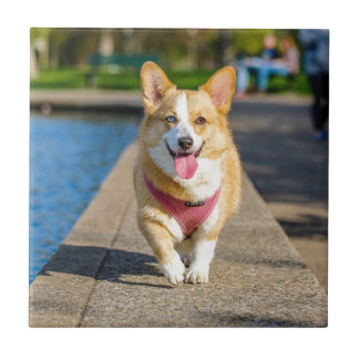 Happy Cute Blue and Brown eyed corgi panting Small Square Tile