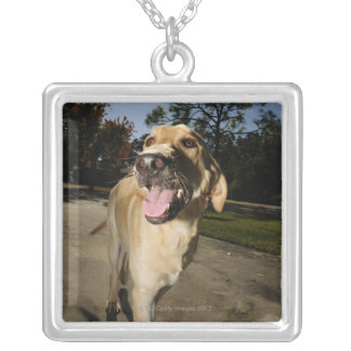 Happy dog running around exercising outdoors in silver plated necklace