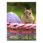 Happy Easter Little Chipmunk 2 Postcards