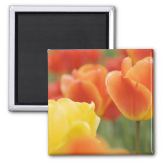 Happy Easter Tulips Magnet