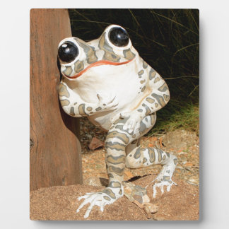 Happy frog with big eyes plaque
