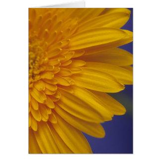 Happy Gerber Daisy Card