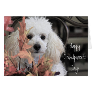 Happy Grandparents Day Poodle dog card