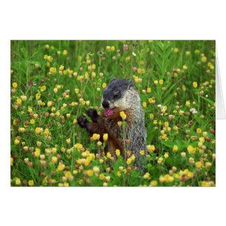 Happy Groundhog Day Card! Card